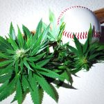 cannabis in sports
