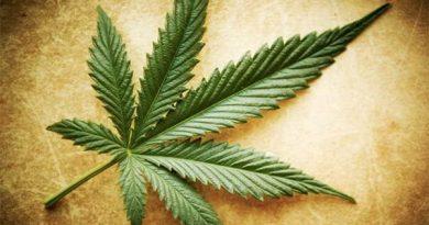 medical benefits of weeds